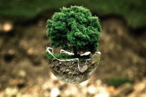 Szkolenie online z dziedziny środowiska.
